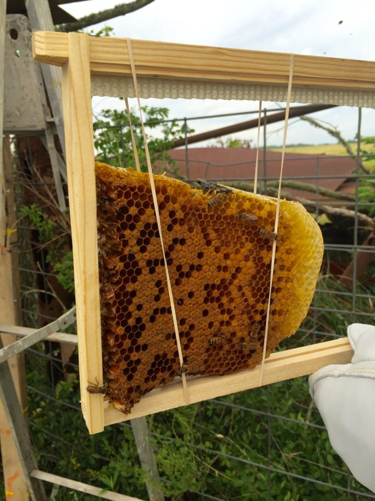 Brood Comb to Replace Queen