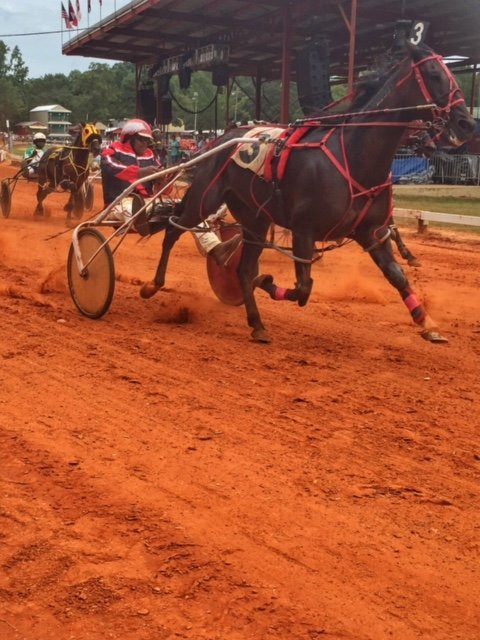 Harness Racing at Neshoba County Fair