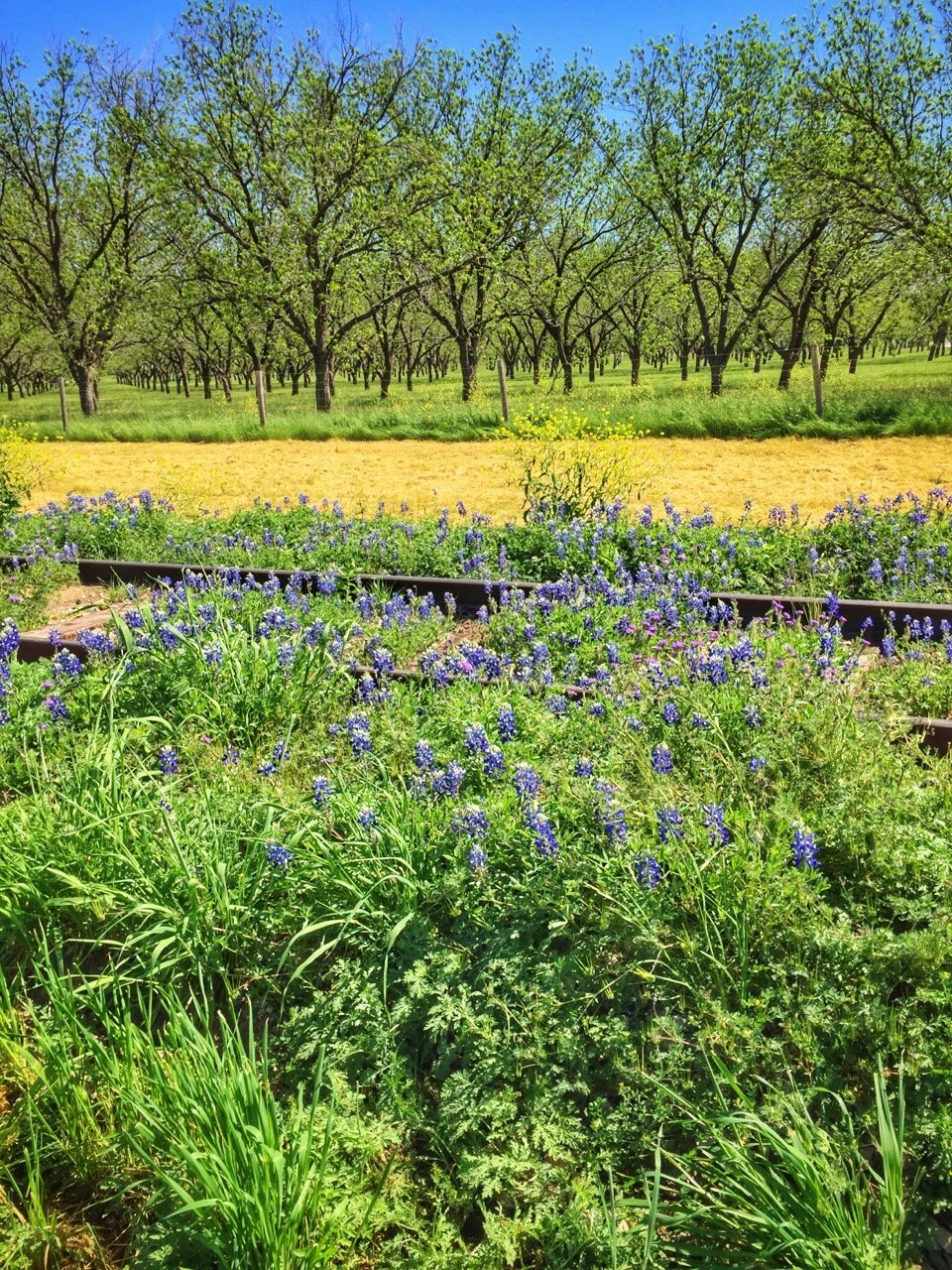 How To Spend A Spectacular Weekend in San Saba