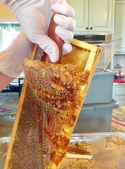 scraping honey and comb from frame