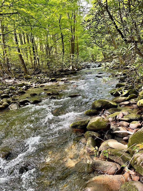 river in Great Smoky Mountain National Park